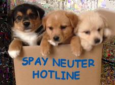 Low Cost Spay Neuter Clinics - Maricopa County - Animal