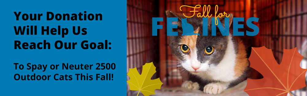 Fall For Felines Donate to Spay Neuter 2500 Outdoor Cats
