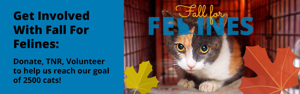 Participate in our Fall For Felines effort to spay and neuter 2500 cats!